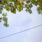 autumn Powerlines