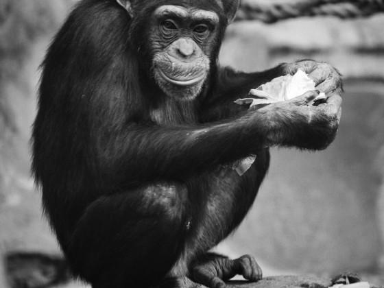 Zum Thema zoo