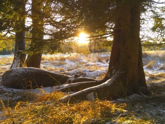 Winterspaziergang im Moor