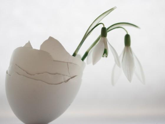 Frisch aus dem Ei