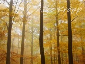 Herbstnebel im Stadtwald