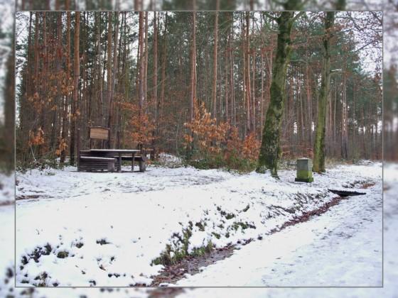 Schnee im Sradtwald