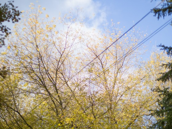 autumn Powerlines